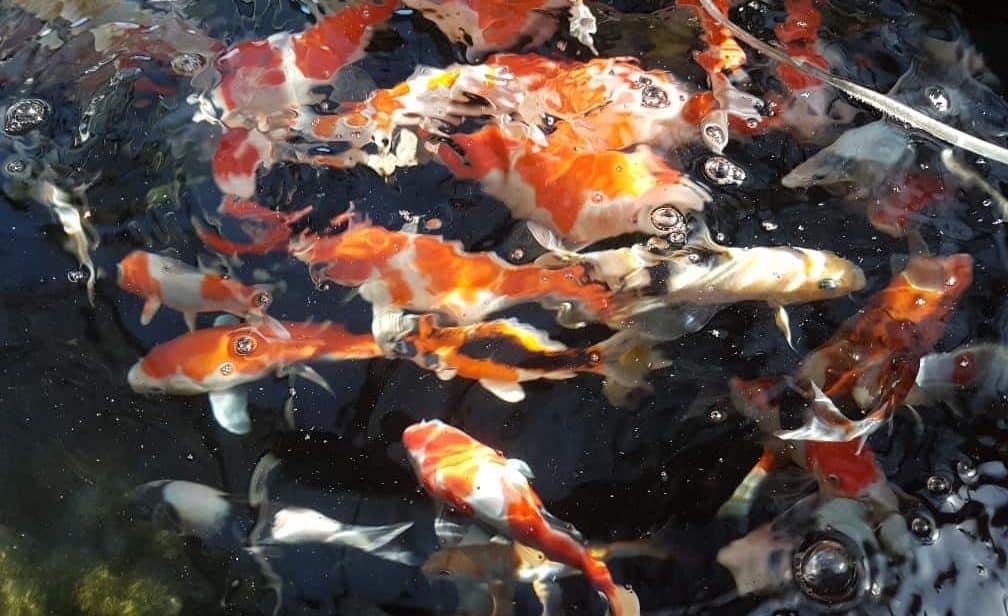 Fish Inspection